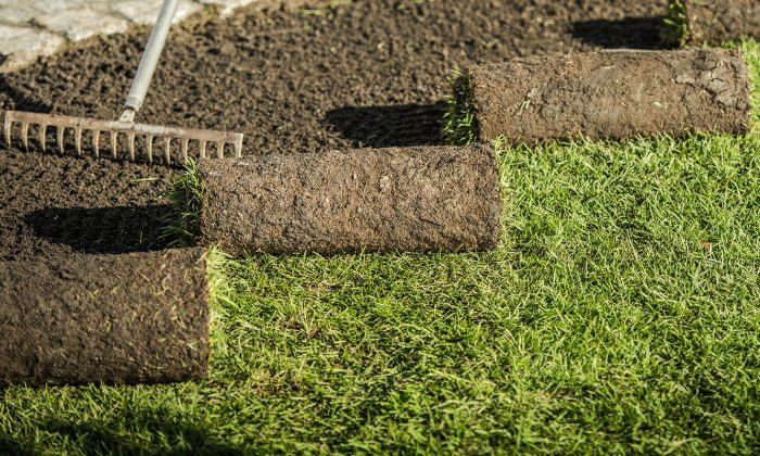 Replacing Natural Grass Turfs by Professional Gardener. Landscaping Industry.